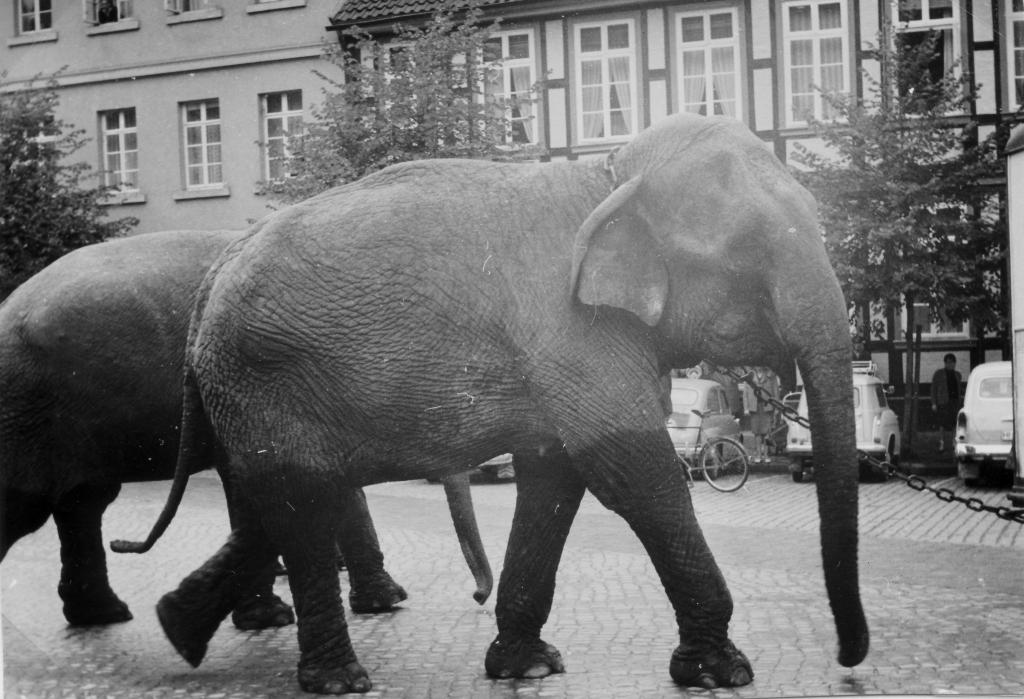 Marktplatz1961-05-CirkusFischer