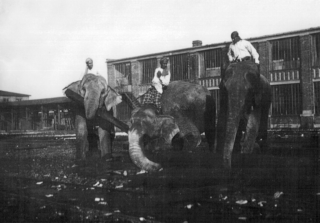 Ruhe-FGZ-Elefanten