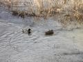 Hochwasser2011-17