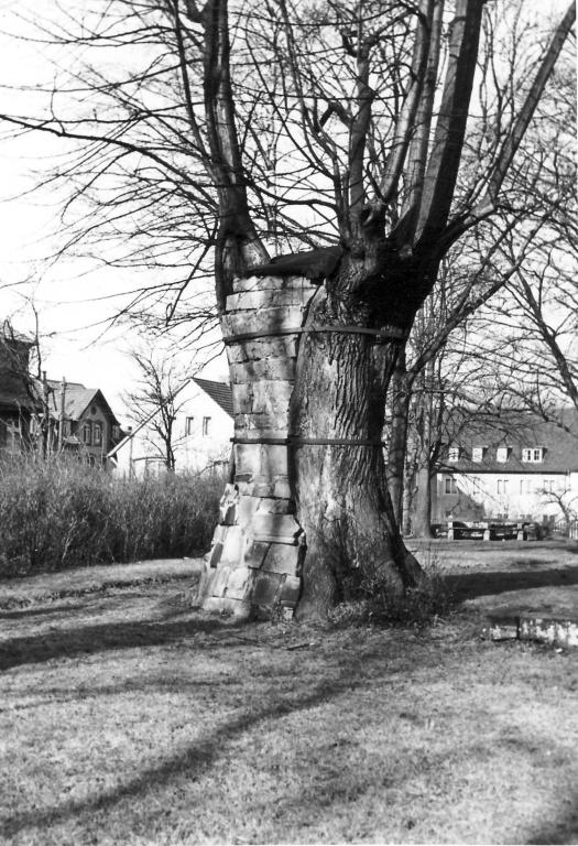 AlterFriedhof1958-01-Gerichtslinde