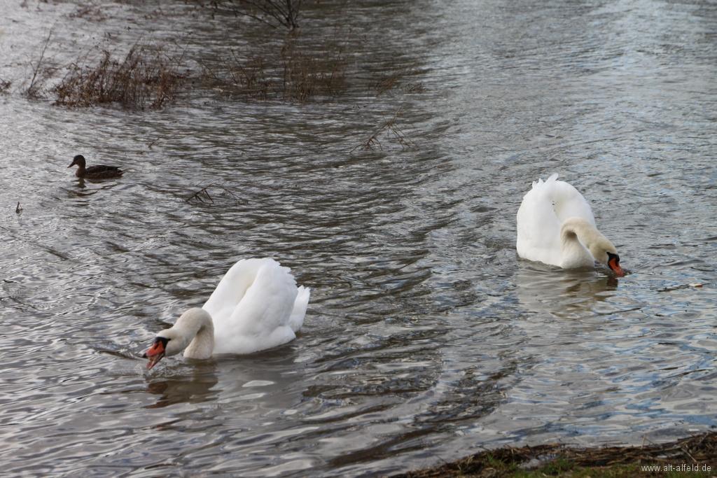 Hochwasser2011-39