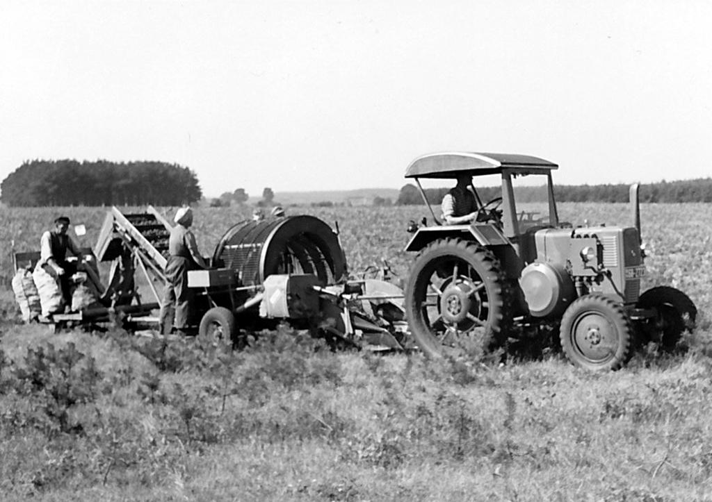 Leinewiesen1950er-04-Kartoffelernte