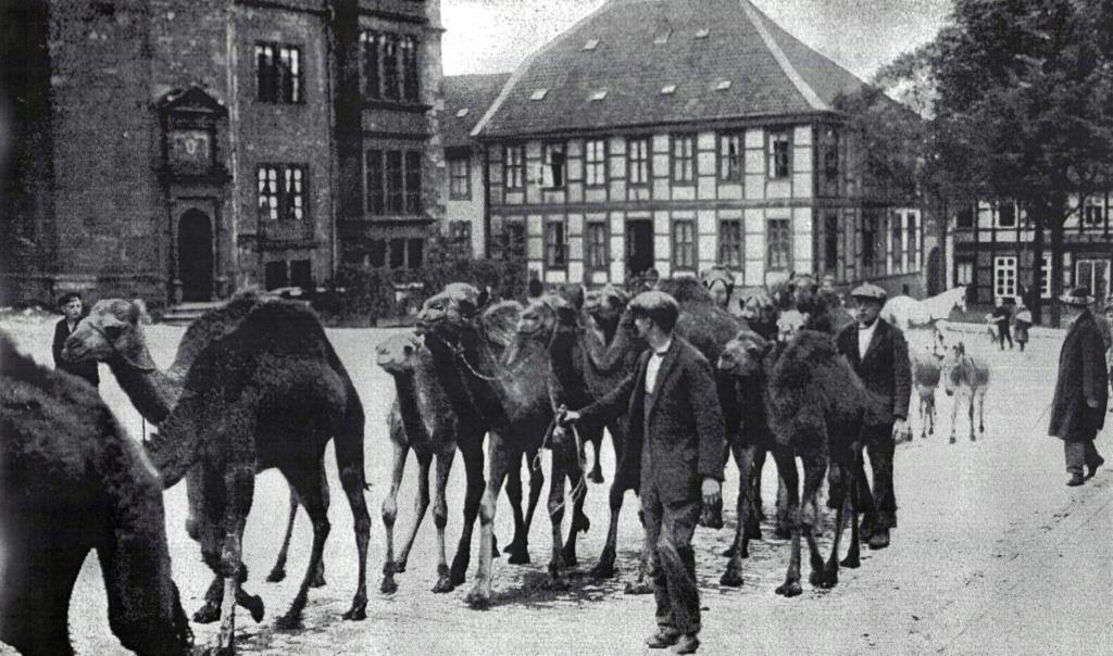 Marktplatz1925-01-TiertransportRuhe