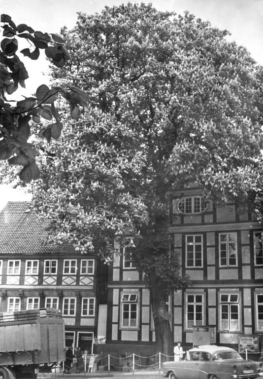 Marktplatz1962-05-Kastanie