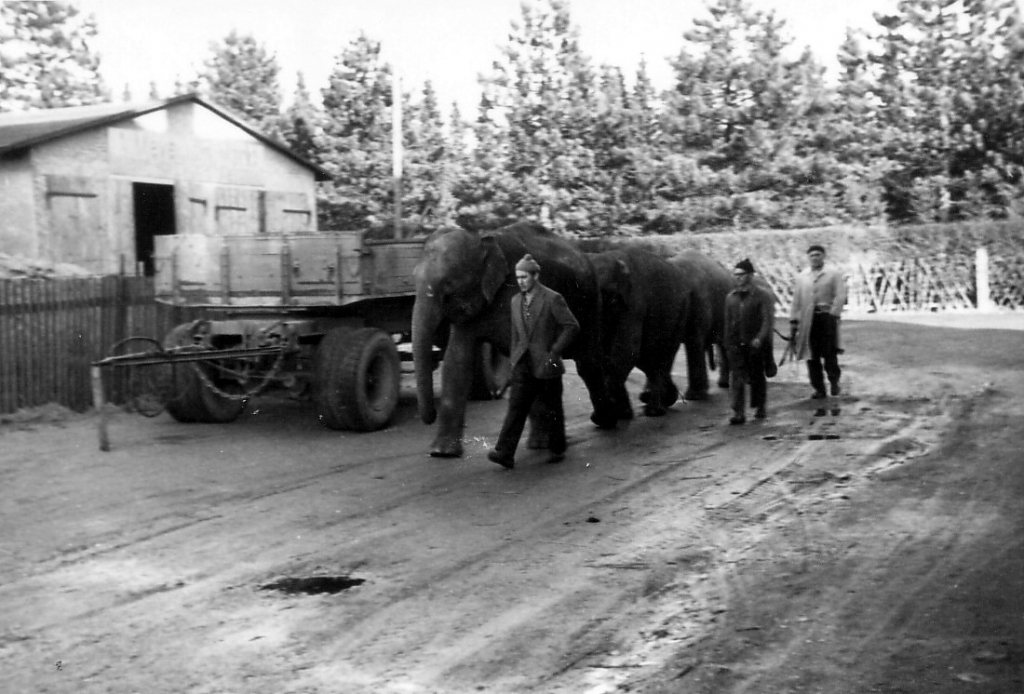 Ruhe1950er-06-Elefantenspaziergang