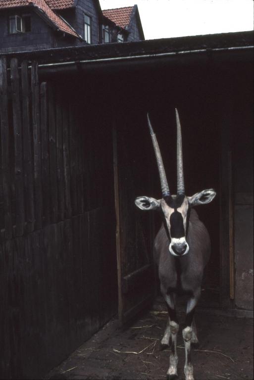 Ruhe1960er-04